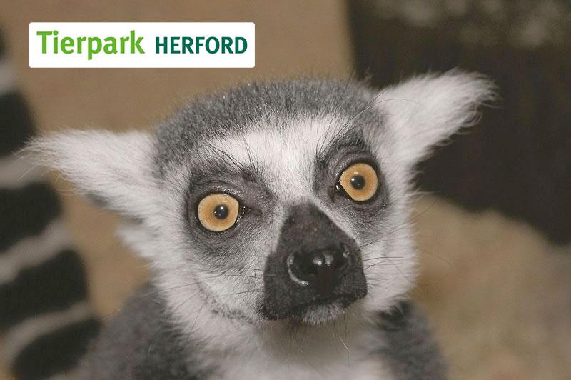 POS TUNING Kooperation Tierpark Herford Lemur
